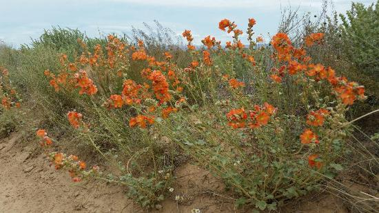 Shiprock Rock Formation: Flowers on prairie