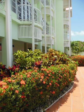 Palm Haven Hotel: Flowers outside our room