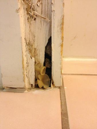 Ramada Flagstaff East : Mushrooms Growing in Door Jam