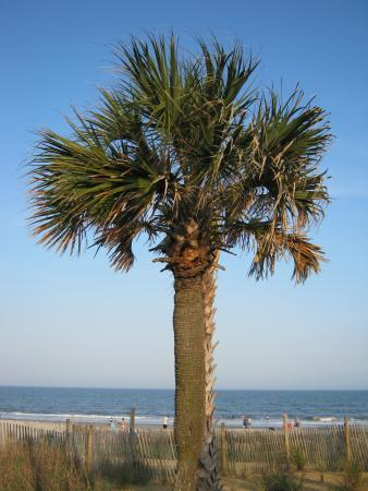 A Palm Tree Picture Of Myrtle Beach