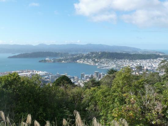 Te Ahumairangi Hill Lookout