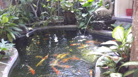 Citrus Tree Villas - Mai Malu: fish pond with prety koi fish