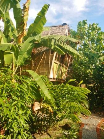 Oceanfront hammock terrace Picture of La Jungla Tropical Bungalows