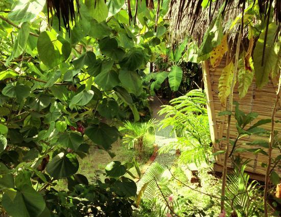 Sun shower with tropical garden Picture of La Jungla Tropical