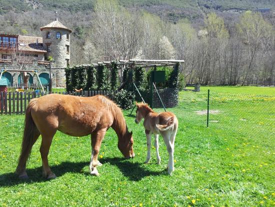 Borda de Ritort: Animales granja