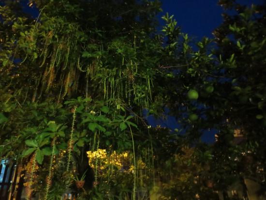 Moc Vien Homestay: garden