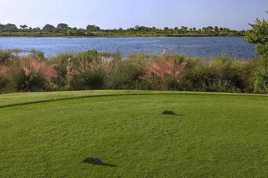 Osprey Point Golf Course: Tee Box