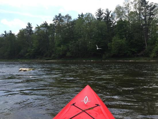 Grand River Rafting Company ... Day Tours