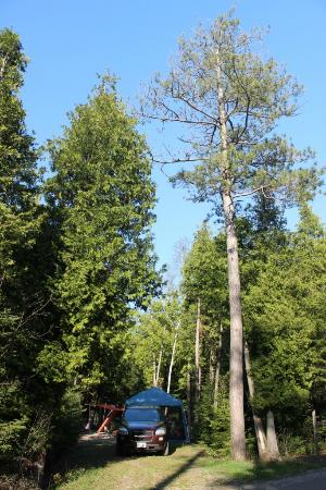 Inverhuron Provincial Park: Secluded and partially shaded site.