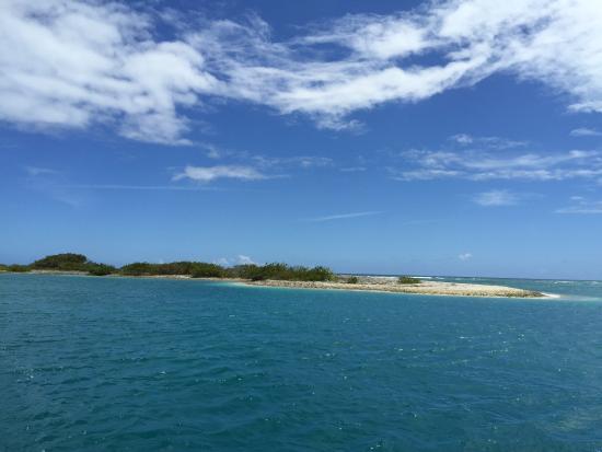 Sharks In St Croix Virgin Islands