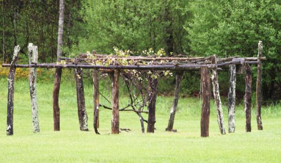 Booker T. Washington National Monument: A Grape Arbor