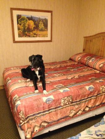 Fernie Stanford Waterslide Resort: Puppy's first hotel room