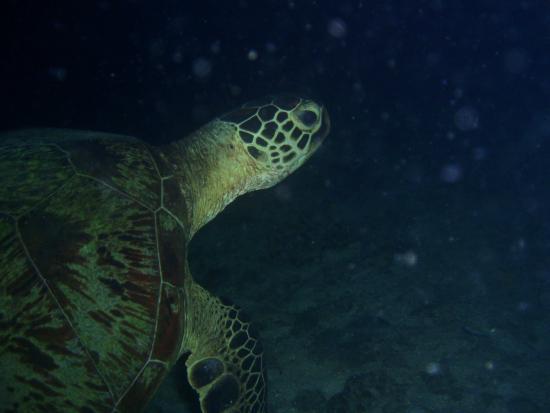 Leyte Dive Resort: Plongée