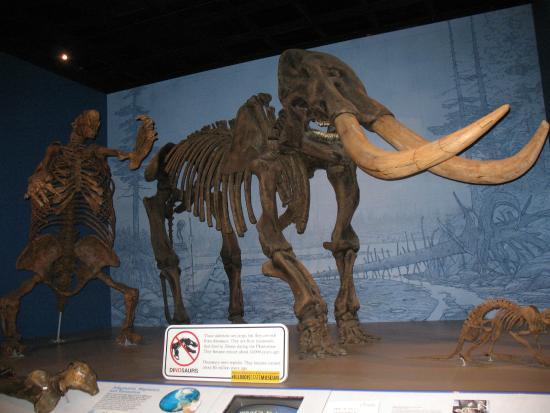 Illinois State Museum: Bones!