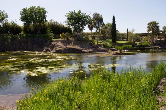 De beplanting aan de randen van de vijver is afwisselend en aantrekkelijk photo de le jardin - Les jardins de saint adrien ...