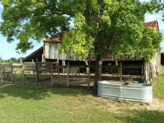 Murski Homestead B&B: barn on grounds