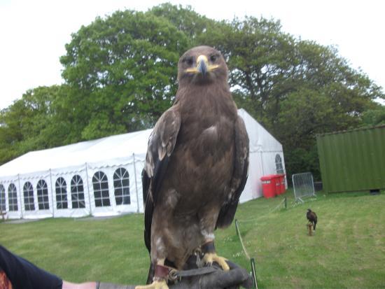 Haven Falconry