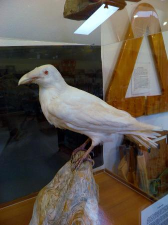 Port Clements, Canada: white raven