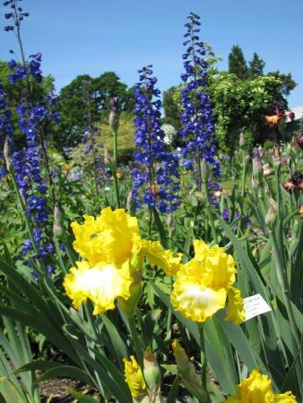 Schreiner's Iris Gardens: Iris smell wonderful.