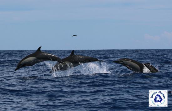 Drake Bay, Costa Rica: Let's Goooooo!