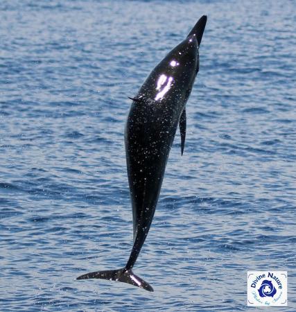 Drake Bay, Kosta Rika: Weeeee!