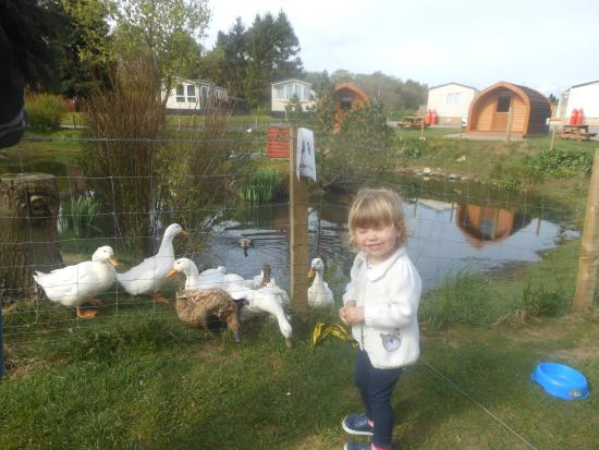 Deeside Holiday Park: she loved the ducks at our doorstep