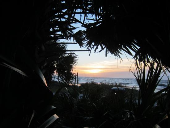 Quality Inn & Suites : Sunrise through the palms