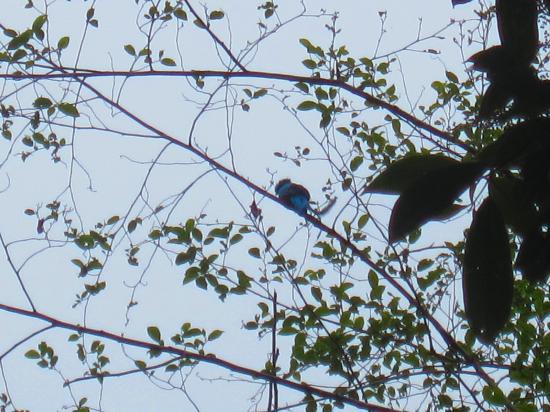 Sendero Los Quetzales (The Quetzales Trail) : I promise that is a Quetzal!