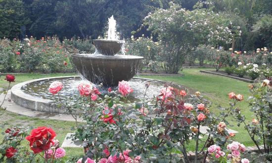 Las plantas acu ticas picture of jardin botanico de for Jardin botanico bogota