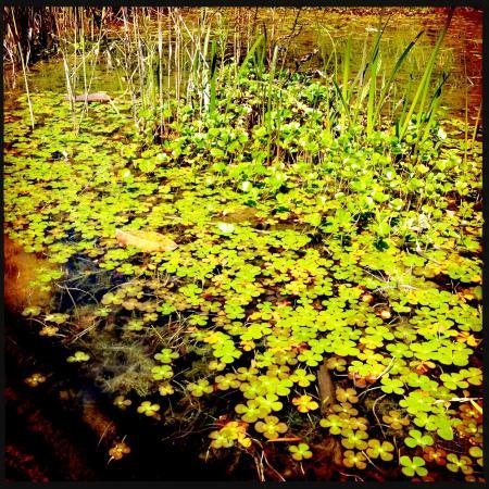 Tadpole pond picture of royal botanic gardens melbourne for Garden pond melbourne