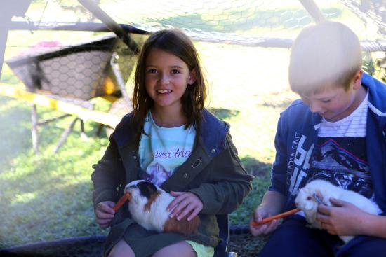 Brierfield, Australia: Patting the guinea pigs