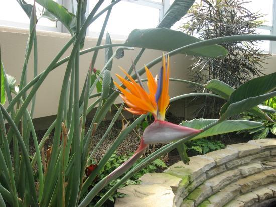 Tipton, MI: Tropical flower