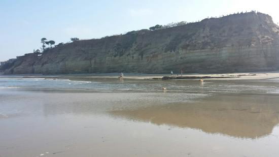 Picture Of Dog Beach Del Mar Tripadvisor