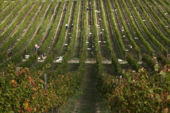 Casalvento Winery Photo