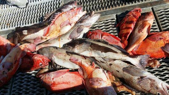 Clayoquot Ventures Tofino Fishing: We got a lot of fish