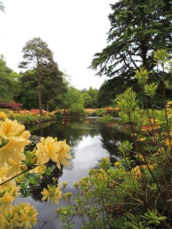 Melton Constable, UK: Stody Lodge Gardens