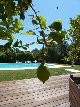 Poisson Rouge : cedrat piscine
