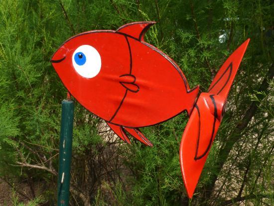 Cadre verdoyant et fleuri photo de poisson rouge for Poisson rouge vacances nourriture