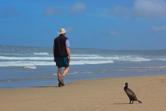 Sandpiper Guest Cottages and The Oystercatcher Trail: Walking on Boggomsbaai beach