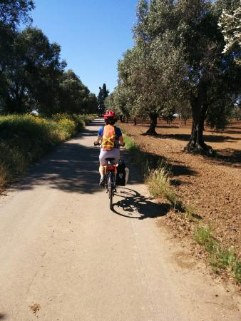 Excursions à vélo