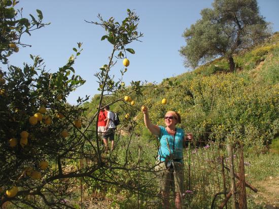 Footscapes of Crete : citroenen plukken onderweg!