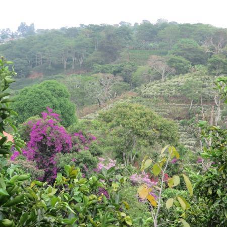 Алахуэла, Коста-Рика: Hills surrounding Xandari