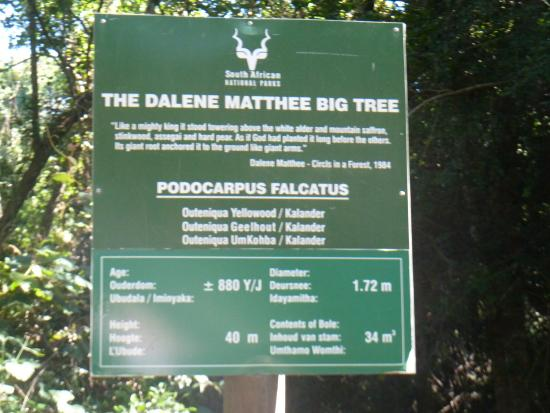 Dalene Matthee Memorial: Sign at the Yellowwood Tree