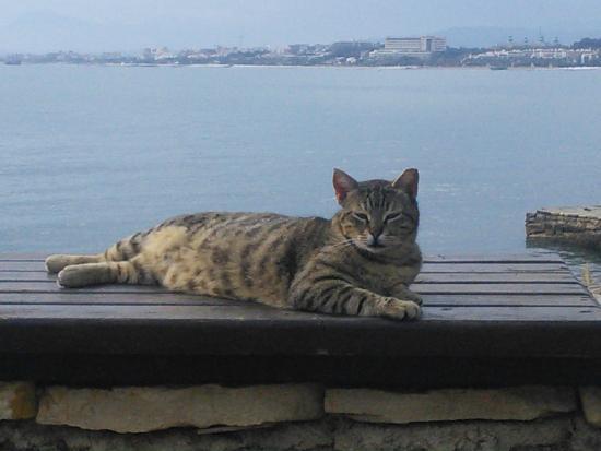 Aral Hotel: Ну как же без котиков