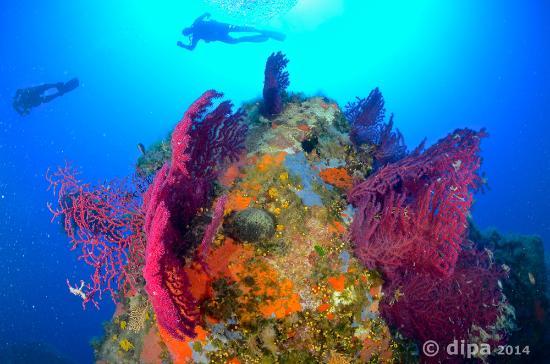 Blu Bubbles Diving : gorgonie short dive