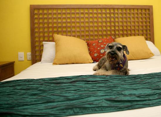 Hotel Santa Maria : Pet Friendly Rooms