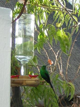 Fountain Place Guesthouse: sunbird