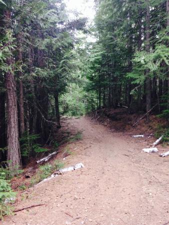 Sandpoint, Айдахо: Horse trails / wagon road