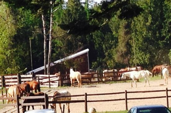 Sandpoint, ID: Horse Corral