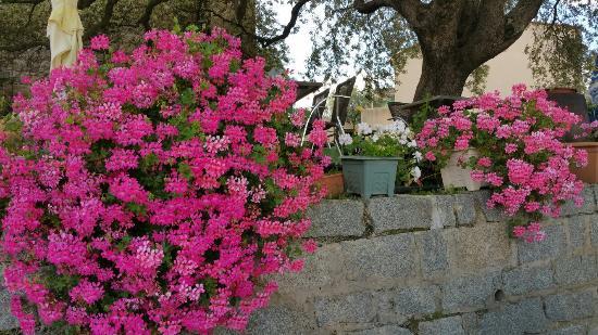 U San Petru : Notre paradis